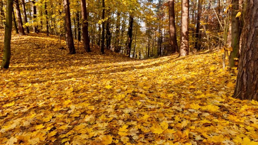Chodzież - Jesień w parku 3 Maja